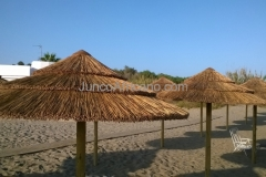 Sombrillas de Junco Africano en Placas